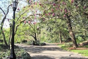Parks & Gardens