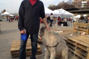Hot dog? Panting pooch on a warm day at Smorgasburg. - Brooklyn Archive