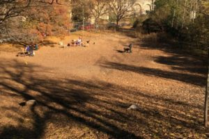 Squibb Hill Dog Park. - Brooklyn Archive