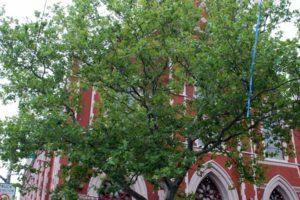 Sacred Hearts & St. Stephen's Church at 108 Carroll Street - Brooklyn Archive